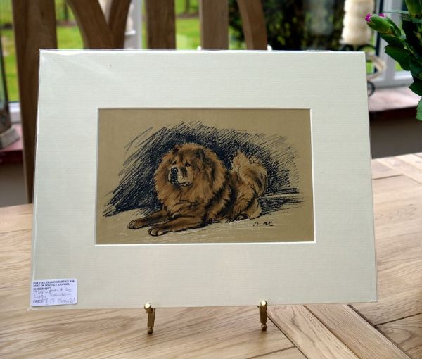 Chow lying down - Chow D1 -  1930's print by Lucy Dawson